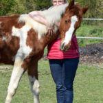 Vanessa Coaching cheval